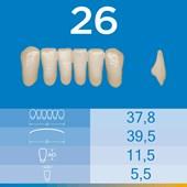 Dente Biotone Anterior Inferior 26