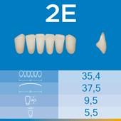 Dente Biotone Anterior Inferior 2E