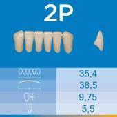 Dente Biotone Anterior Inferior 2P