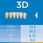 Dente Biotone Anterior Inferior 3D