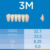 Dente Biotone Anterior Inferior 3M