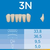 Dente Biotone Anterior Inferior 3N