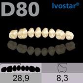 Dente Gnathostar Posterior Superior - D80