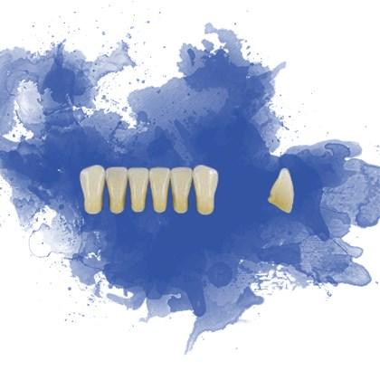 Dente Trilux Anterior Inferior K6