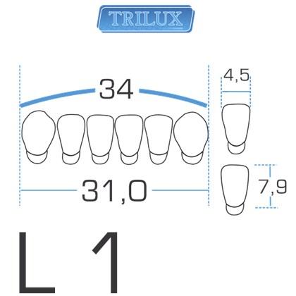 Dente Trilux Anterior Inferior L1